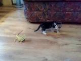 Котенок и ящерицы